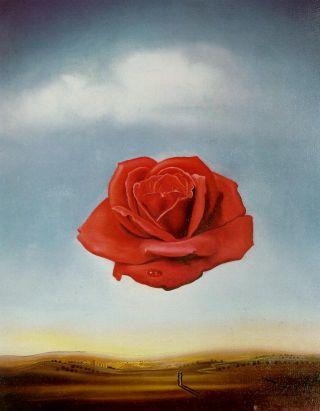 Rose_meditative_salvador_dali